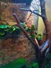 Фото маленькой игуаны в большом террариуме