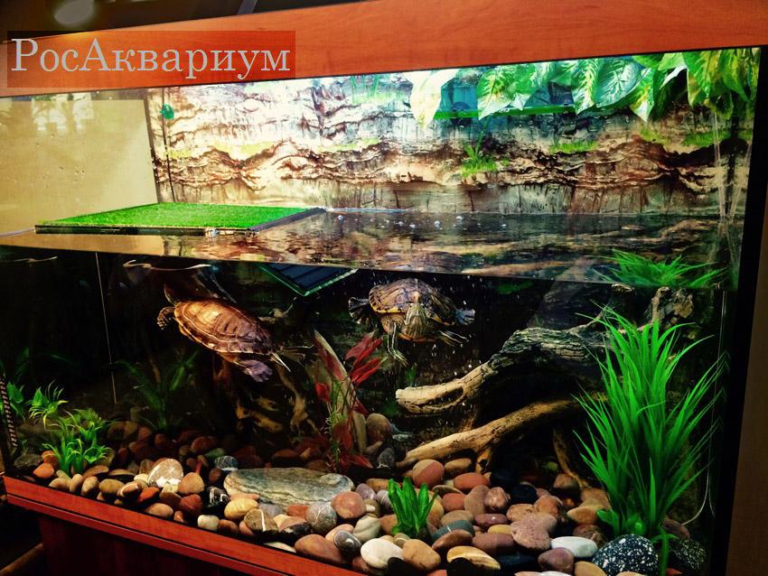 Какие растения можно сажать в аквариум к красноухим черепахам 45